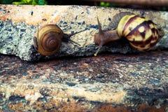 Snail communication. stock image