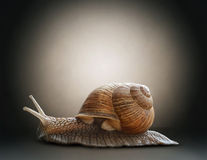 Snail. Concept graphic in soft vintage style. Snail. Concept graphic in soft vintage style royalty free stock photo
