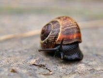Snail on concrete. Close-up of a snail on concrete stock photos