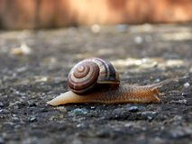 Snail. On a concrete floor with a tape of the sun Royalty Free Stock Image