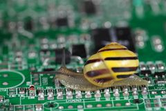 Snail on a conductor board Stock Images