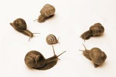Snail Conflict Stock Photos