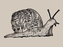 Snail contour with forest silhouettes in it`s body royalty free illustration