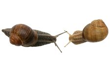Snail Conversation Royalty Free Stock Image