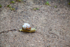 Snail with cracked shell on the ground Stock Photos