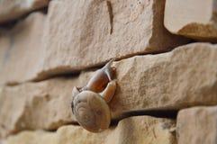 Snail crawl slowly on the wall Stock Photo