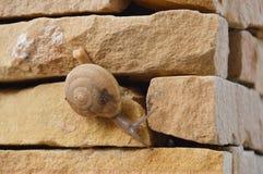 Snail crawl slowly on the wall Royalty Free Stock Photos