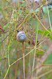 Snail crawl Stock Images
