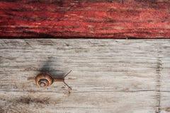 Snail crawling across wood plank Royalty Free Stock Photos
