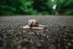 Snail crawling on asphalt close-up view on blurry background. Snail crawling on asphalt close-up view royalty free stock images