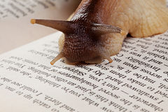 Snail crawling on book, close-up Stock Photo