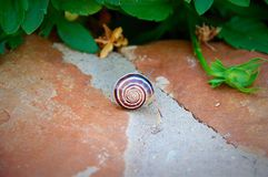 Snail. Crawling on cement stock photography