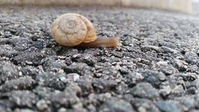 Snail crawling in close up stock footage