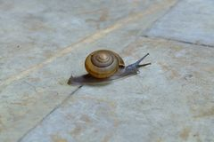 Snail crawling on the concrete. Royalty Free Stock Images