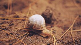 Snail Crawling on Dirt Stock Photo