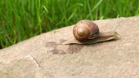Snail crawling (dolly shot) stock video footage