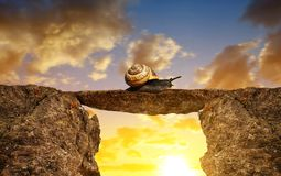 The snail crawling through the gap. Stock Photo