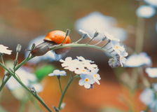 Snail. A snail crawling in a garden Stock Images