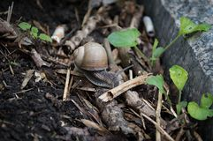 Snail crawling on the ground royalty free stock photos