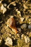 Snail crawling at the ground meeting with ant race. Snail on the ground Royalty Free Stock Photography
