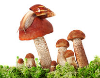 Snail crawling on a group of mushrooms Stock Photos