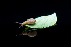 A snail. Stock Images
