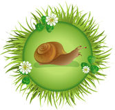 Snail crawling on the meadow. Insects and summer nature icon. snail crawling on the meadow Royalty Free Stock Photos