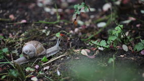 Snail crawling in nature stock video footage
