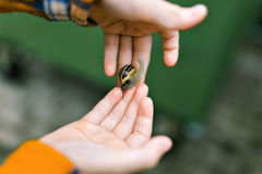 Snail. Crawling on the one hand to the other child Stock Images