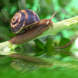 Snail crawling on plant Stock Photo