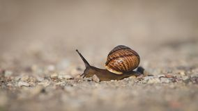 A snail crawling on the road Stock Photos