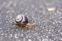 Snail crawling on the road Royalty Free Stock Images