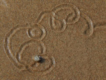 Snail crawling on the sand leaving patterns. Closeup Royalty Free Stock Photography