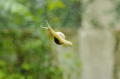Snail crawling slowly on glass door with garden background Stock Image