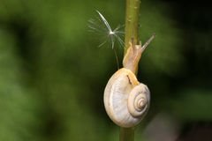 Snail. Crawling slowly on the plant Stock Photos