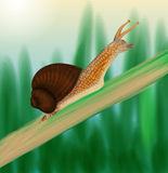 Snail crawling on a stem Stock Image