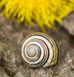 Snail. Crawling on a stone, macro shot Stock Photo