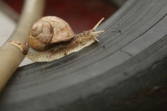 Snail crawling on a tire Royalty Free Stock Images