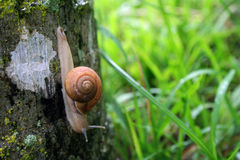 Snail crawling on tree Stock Photos