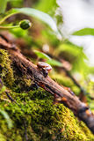 Snail crawling on a tree branch. Little snail on a tree branch on green leaf background. Selective focus Stock Image