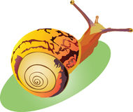 Snail crawling up Stock Photo