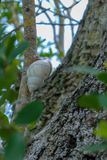 Snail crawling up branch of tree royalty free stock photography