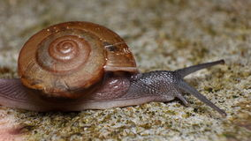 Snail crawling very slowly Stock Photos