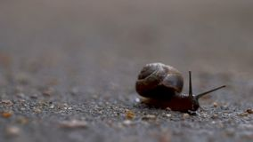 The snail crawls along the wet asphalt stock video