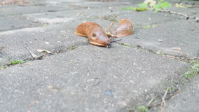 The snail crawls stock video footage