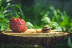 The snail crawls to the strawberry on the stump.  Royalty Free Stock Photos