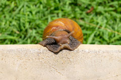 Snail creep concrete  top view Royalty Free Stock Images