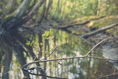 Snail creep on twig against small pond in forest Stock Photography