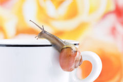 Snail creeping on a coffee cup Stock Image