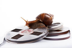 The snail creeps on a recorder tape. On a white background Royalty Free Stock Image